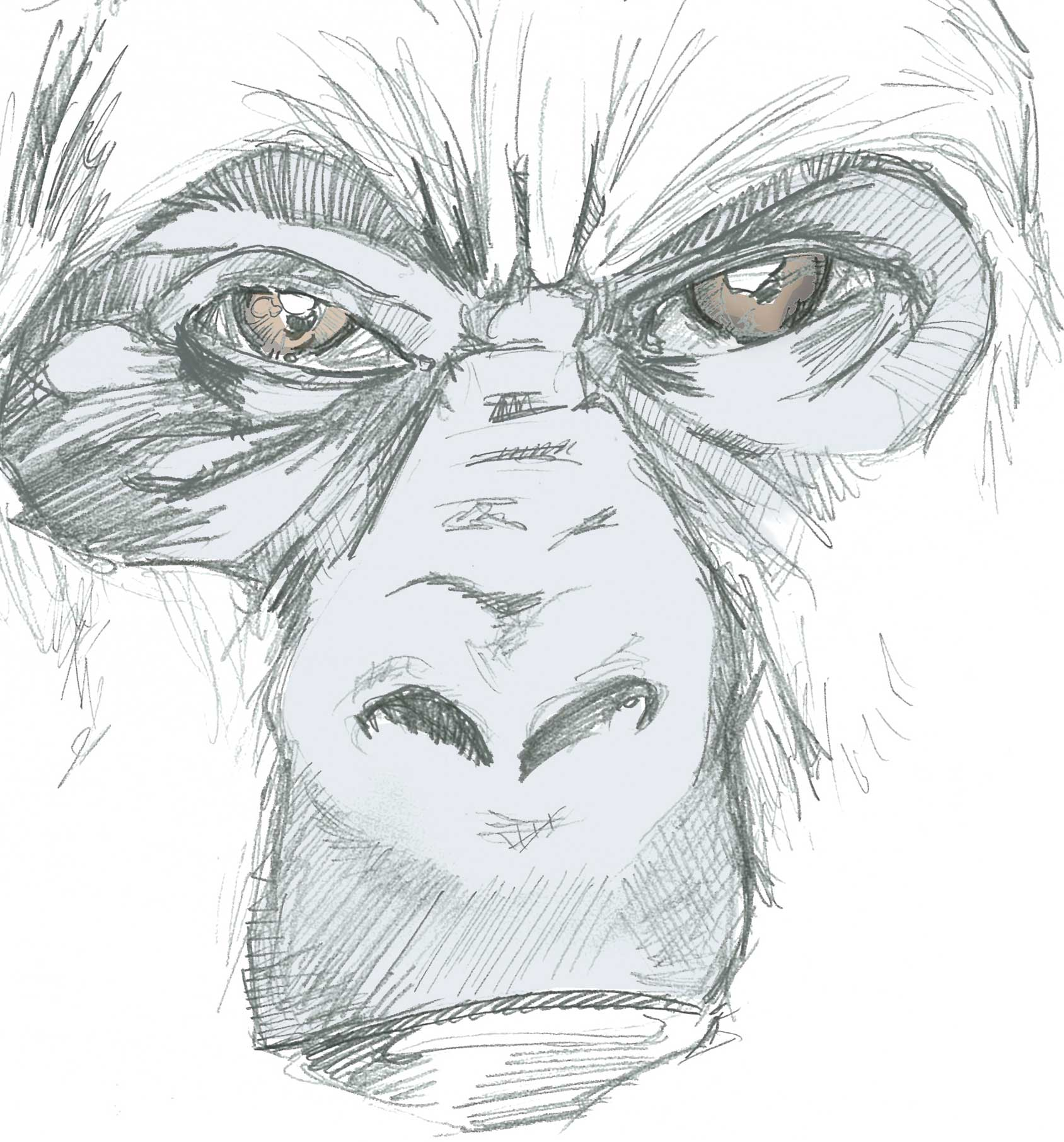 Gorilla Face Line Drawing : Angry gorilla face drawing