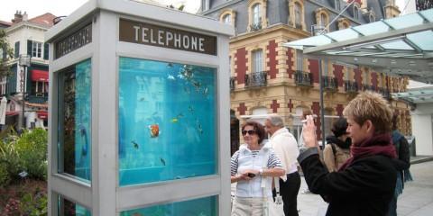 phonebooth-aquarium-benedetto-bufalino-2
