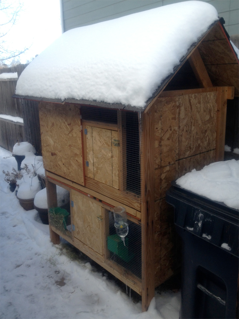 Best Hutch Ever in the Snow