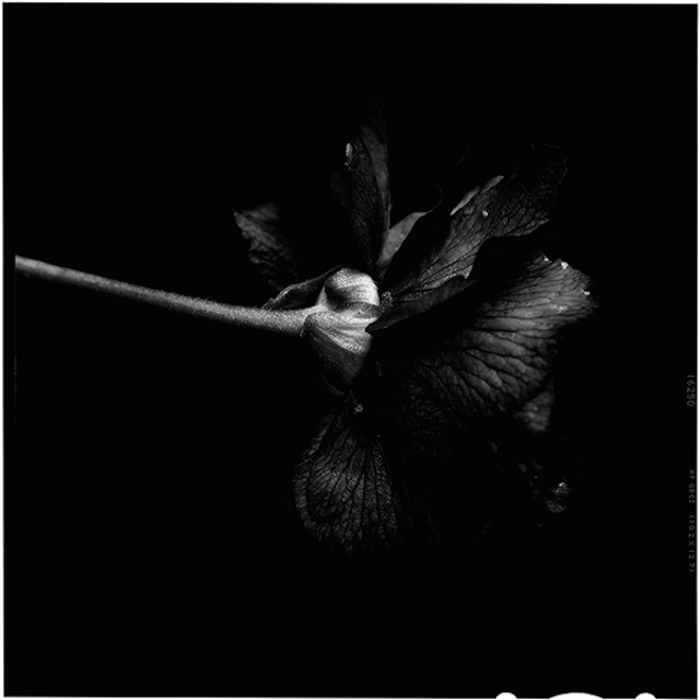 Black-to-Black-Flowers-3
