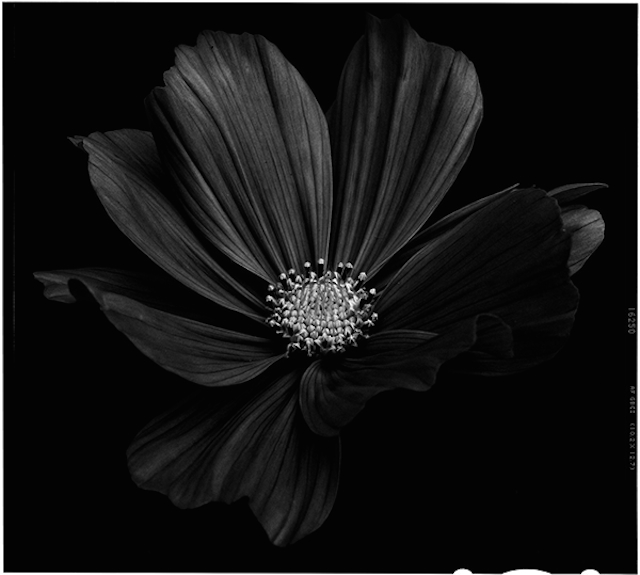 Black-to-Black-Flowers-5