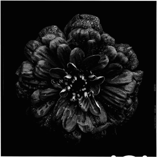 Black-to-Black-Flowers-7