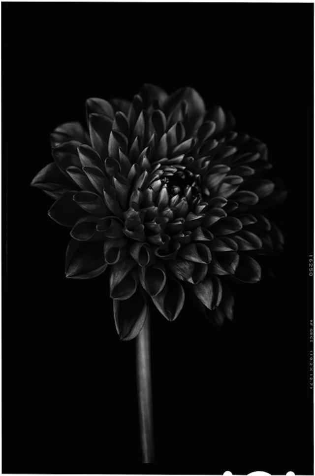 Black-to-Black-Flowers-8