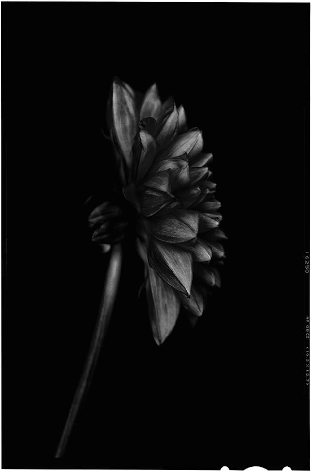 Black-to-Black-Flowers-9
