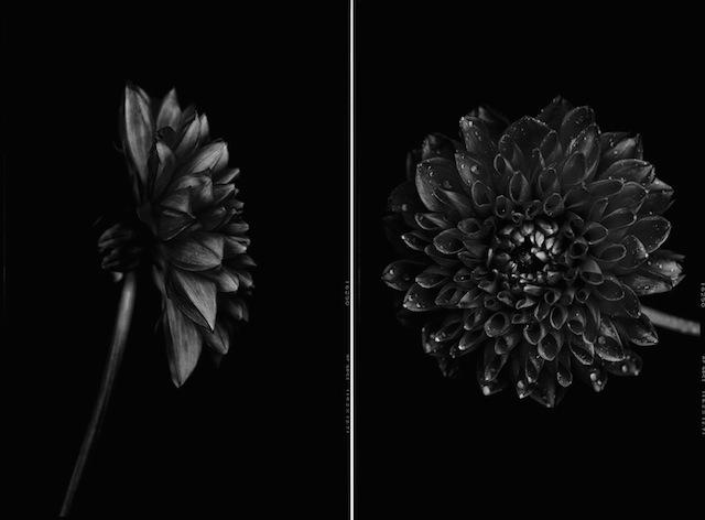Black-to-Black-Flowers1