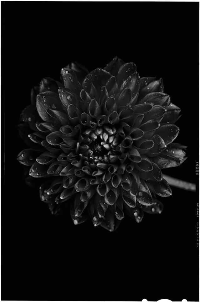 Black-to-Black-Flowers4
