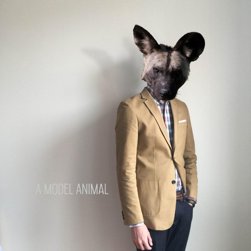 hyena-web